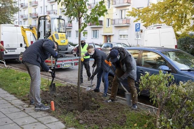 Przy ulicy Lelewela społecznicy posadzili 23 lipy. Nie odkładają łopat, wkrótce zazieleni się przy innych ulicach miasta