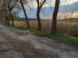 Skępe. Po tragedii w parku przyglądają się drzewom w całej gminie. Będą wycinki!
