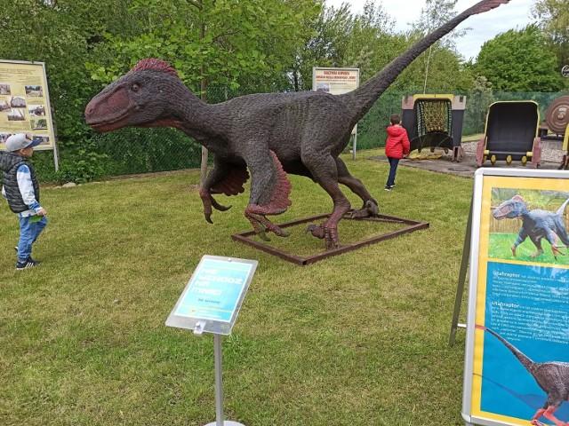 Piknik Paleontologiczny w Koninie