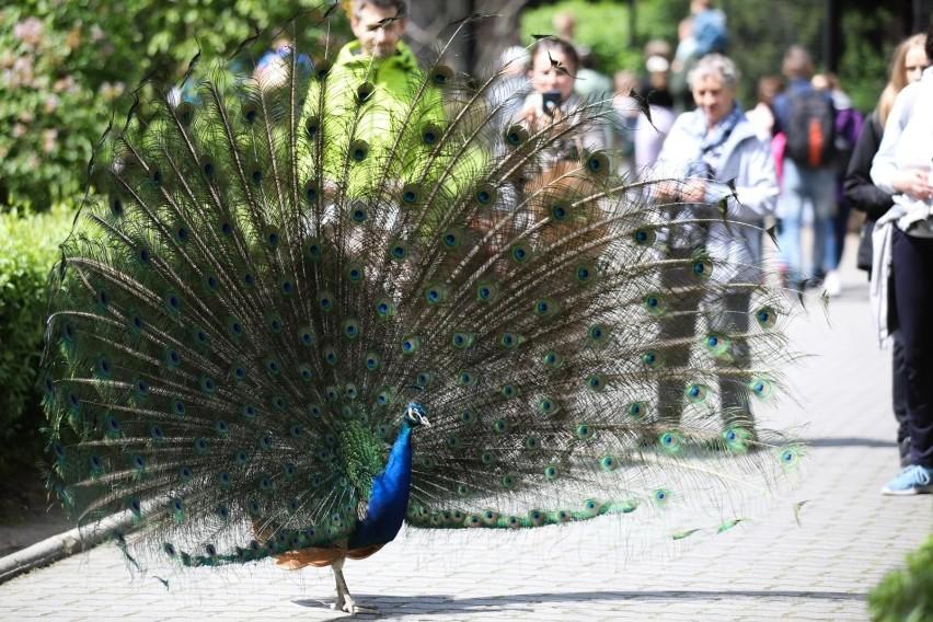 Krakowskie zoo to jedno z najpopularniejszych miejsc...