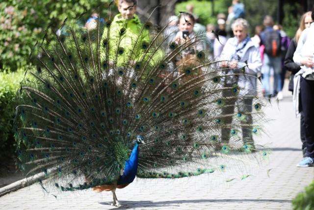 Krakowskie zoo to jedno z najpopularniejszych miejsc rekreacyjnych wybieranych przez Małopolan