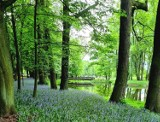 Pleszew. Posadzili tysiące drzew, krzewów i kwiatów