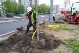 Przebudowywana ulica Szafera daleka od betonowiska. Miasto organizuje setki nasadzeń