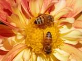 Światowy Dzień Pszczół - 20 maja 2021. Co produkują pszczoły? [Zdjęcia]