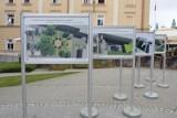 """Wystawa """"Zielone Podwórka"""" na przemyskim Rynku [ZDJĘCIA]"""