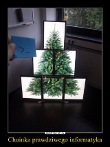 Niezwykłe choinki świąteczne. Te drzewka na pewno Was zaskoczą! [ZDJĘCIA]