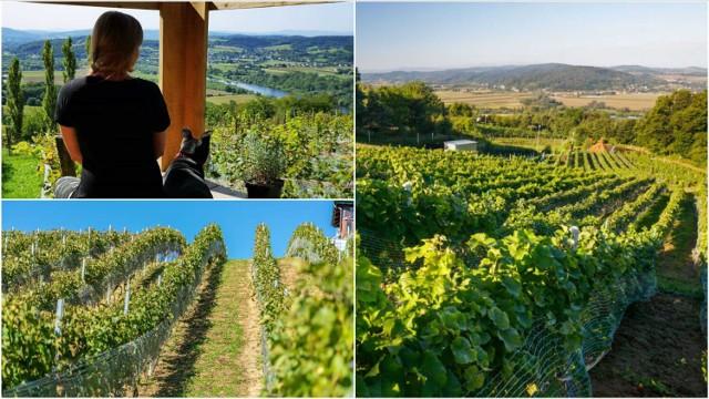 W okolicach Tarnowa przybywa winnic. Większość z nich jest położona w urokliwej okolicy