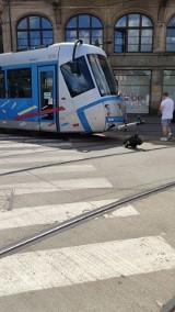 Wrocław. Uwaga pasażerowie MPK. Wykoleił się tramwaj w centrum miasta. Są utrudnienia!