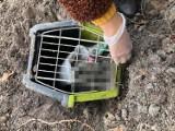 Kontener z martwym kotem na Górze Chełmskiej. Wyjaśniamy sytuację. Uwaga - drastyczne zdjęcia