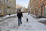 """Przebywasz na kwarantannie, a Twój pies potrzebuje spaceru? A może chcesz pomóc wyprowadzić zwierzaka? Zgłoś się do grupy: """"Pies w Koronie""""!"""