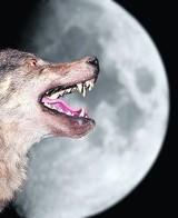 Księżyc w pełni i blisko Ziemi