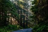 Znów będzie zakaz wstępu do lasów na Dolnym Śląsku (SPRAWDŹ, GDZIE I KIEDY)