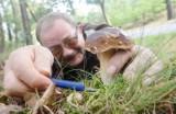Jak nie zatruć się grzybami? Sprawdź! [WIDEO]
