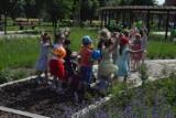 """""""Ogrody na Ogrodach"""" oficjalnie otwarte. Korzystają dzieci i dorośli (ZDJĘCIA)"""