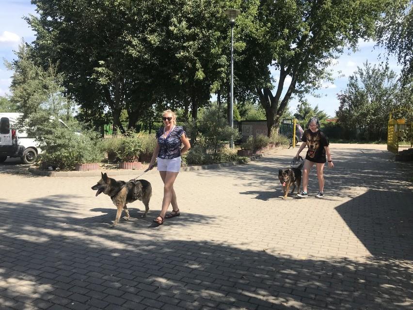 Spacer z psami ze schroniska w Szczecinku