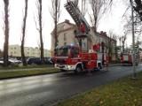 Interwencja straży pożarnej do zagrażającej gałęzi w Ustce [ZDJĘCIA]