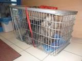 Psy w strasznym stanie podrzucone do schroniska. Sprawą zajmie się policja