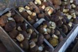 Wybierasz się na grzyby? Fachowiec radzi, gdzie pod żadnym pozorem ich nie zbierać