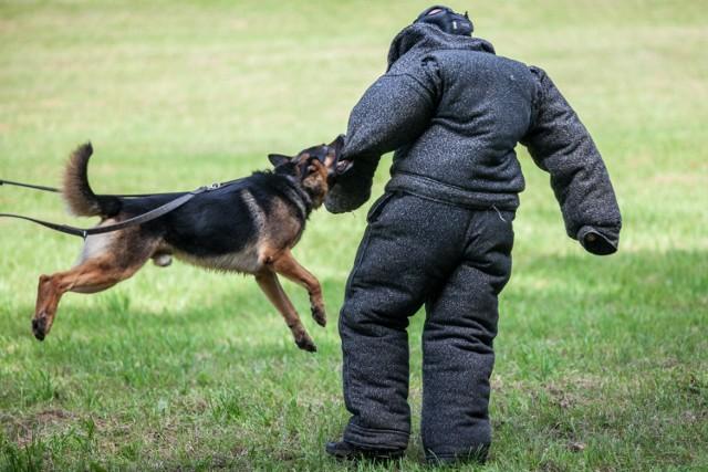 26.07.2016 bydgoszcz myslecinek zawody psy policja kynologia fot. filip kowalkowski/polska press