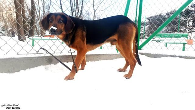 Pies przebywa obecnie w tarnowskim Azylu przy ul. Komunalnej