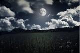 Kalendarz księżycowy ogrodnika na czerwiec 2020. Zobacz, co zrobić w ogrodzie i kiedy