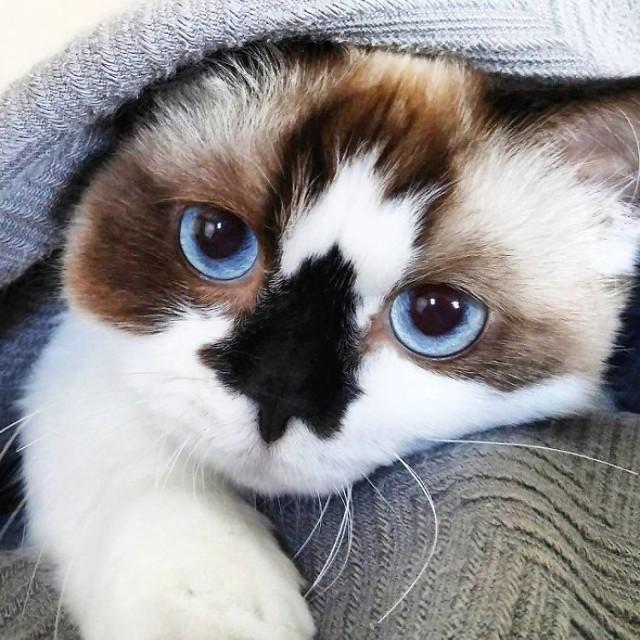 Ten kot podbija Internet. Wiemy dlaczego! [GALERIA]