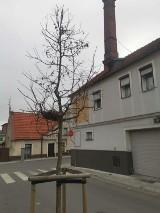 Pleszew. W centrum miasta ptaki uwiły sobie gniazdo
