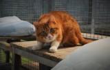 """Koty do adopcji. Czekają na dom w koszalińskim """"Leśnym Zakątku"""" [ZDJĘCIA]"""