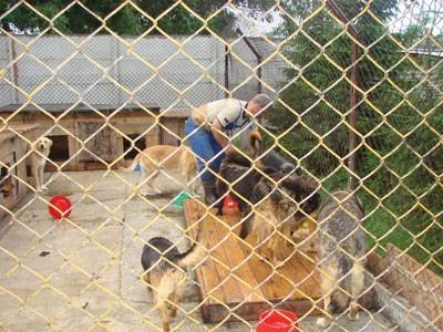 Psy i koty, które przebywają w Schronisku dla Bezdomnych Zwierząt w Mysłowicach czekają na nowy dom