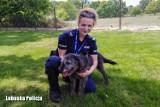 Policja Krosno Odrzańskie/Gubin. Rozmowa z policjantką, która uratowała psa, a później go przygarnęła. To jej najwierniejszy przyjaciel