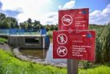 Zbiornik retencyjny Świętokrzyska I w Gdańsku został skażony. Martwe ryby i kaczki! Urzędnicy ustalają przyczynę i szukają sprawcy