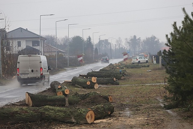 Wszystkie drzewa zostały wycięte  na 700-metrowym odcinku drogi między ul. Gajcego w Łodzi a Wiączyniem Dolnym. W zamian za 64 drzewa mieszkańcy zyskają drogę rowerową i chodnik.  CZYTAJ DALEJ NA NASTĘPNYM SLAJDZIE