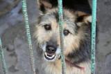 Na ul. Armii Krajowej w Bydgoszczy ktoś przywiązał i zostawił psa. Co robić w takich sytuacjach? Jak pomóc zwierzęciu?