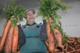 Wągrowiec. Rolnik Aleksander Olejniczak z podwągrowieckiego Rgielska wyhodował olbrzymią marchew. Okazy ważą nawet powyżej kilograma