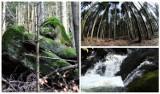 Na szlakach Magurskiego Parku Narodowego w wielu miejscach zrobiło się wiosennie. Diabli Kamień i wodospad przyciągają [ZDJĘCIA]