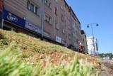 Tak prezentuje się łąka kwietna w centrum Szczecinka. Ładnie? [zdjęcia]