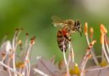 Dziś święto pszczół. Przypomina o nim Nadleśnictwo Starogard