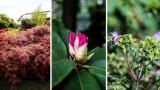 W tym ogrodzie jest jak w bajce - teraz kwitną najpiękniejsze azalie! Zobacz ogrody japońskie w Pisarzowicach