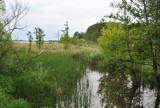 Park linowy w pobliżu Jeziora Berzyńskiego? Taki jest pomysł. Gmina ma szansę przejąć nieodpłatnie cenne tereny