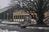 Palmiarnia Poznańska zostanie rozbudowana? Są plany renowacji parku Wilsona