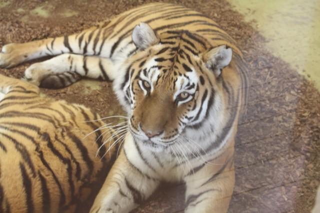 Walentynki w zoo Chorzów: zakochani za bilety zapłacą mniej