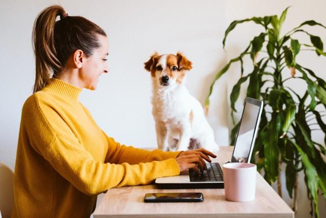 Pracujesz zdalnie? Masz się z czego cieszyć - oszczędzasz czas na dojazdach do biura. Sprawdź, jak zorganizować pracę z domu, by była efektywna i nie stała się koszmarem.