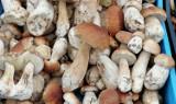 Co na targowisku w Kołobrzegu? W jakiej cenie? Są grzyby? Otóż są, z prawdziwkami na czele