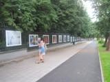 Galeria Saska w Lublinie zaprasza na atrakcyjną wystawę na świeżym powietrzu