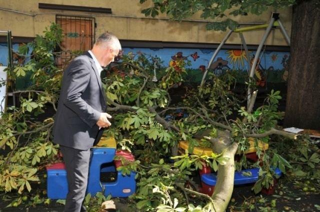 Wypadek na placu zabaw Przedszkola Miejskiego nr 1 w Toruniu. Konar spadł na bawiące się tam dzieci