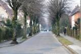 Ulica Miła w Bytowie nadal będzie miła. Urzędnicy wycofują się z wycinki 54 drzew