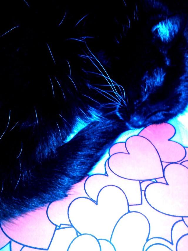 Te zdjęcia kotów są niesamowite. Czekamy na więcej!