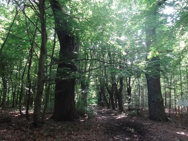 Zielony Las w Żarach. Popularne miejsce rekreacyjne nie tylko wśród mieszkańców Żar