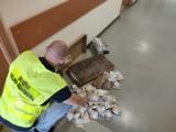 Nielegalne papierosy w Ślesinie. Celnicy przejęli wyroby bez polskich znaków akcyzy