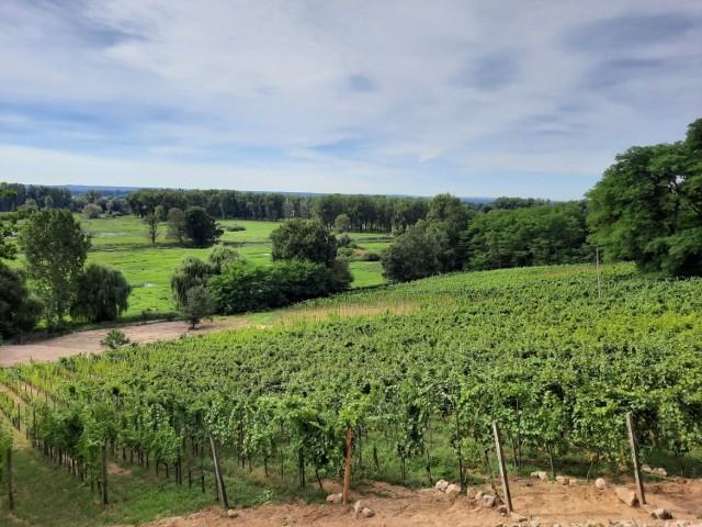 Wczoraj sommelierzy gościli w winnicy Stara Winna Góra w Górzykowie